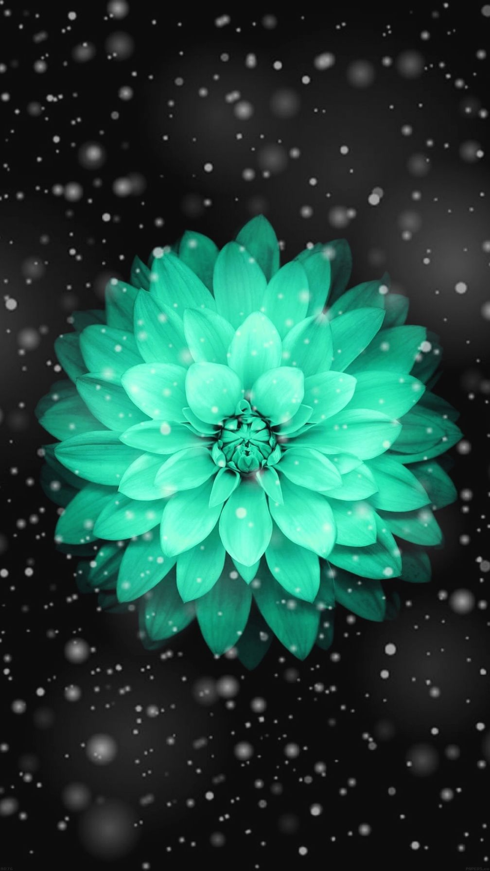 1000 Ideas About Cute Wallpapers On Pinterest Iphone Wallpapers For Top 10 Best Iphone Wallp Teal Flower Wallpaper Flower Iphone Wallpaper Pretty Wallpapers