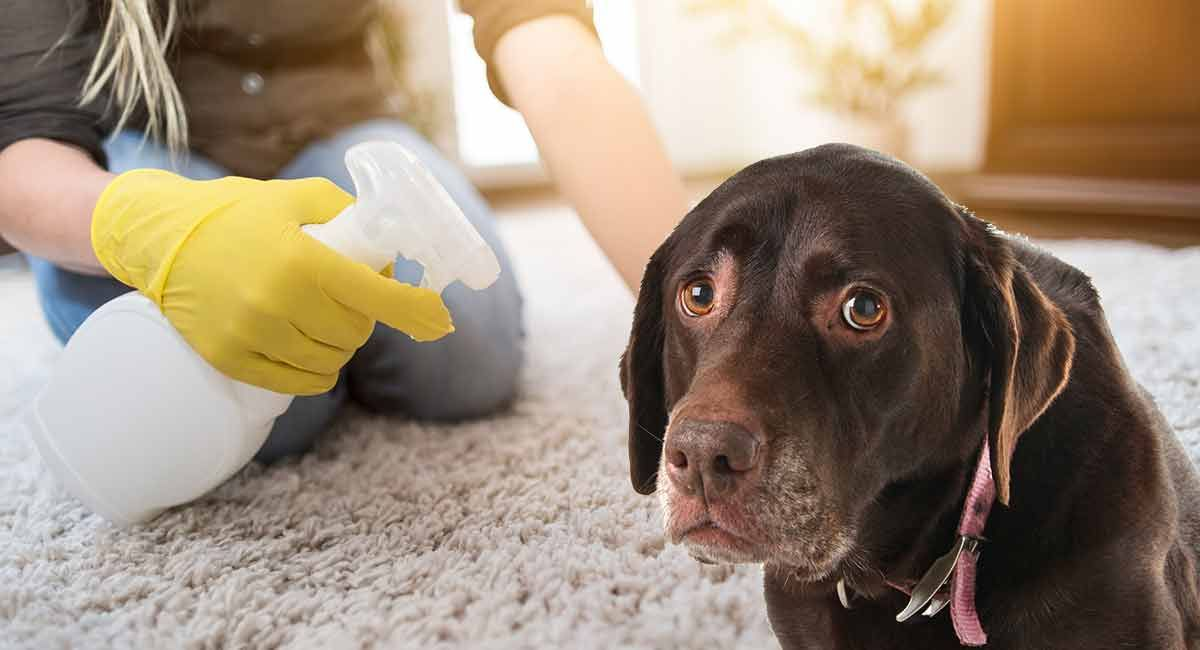 how to clean dog's eyes tear stains naturally