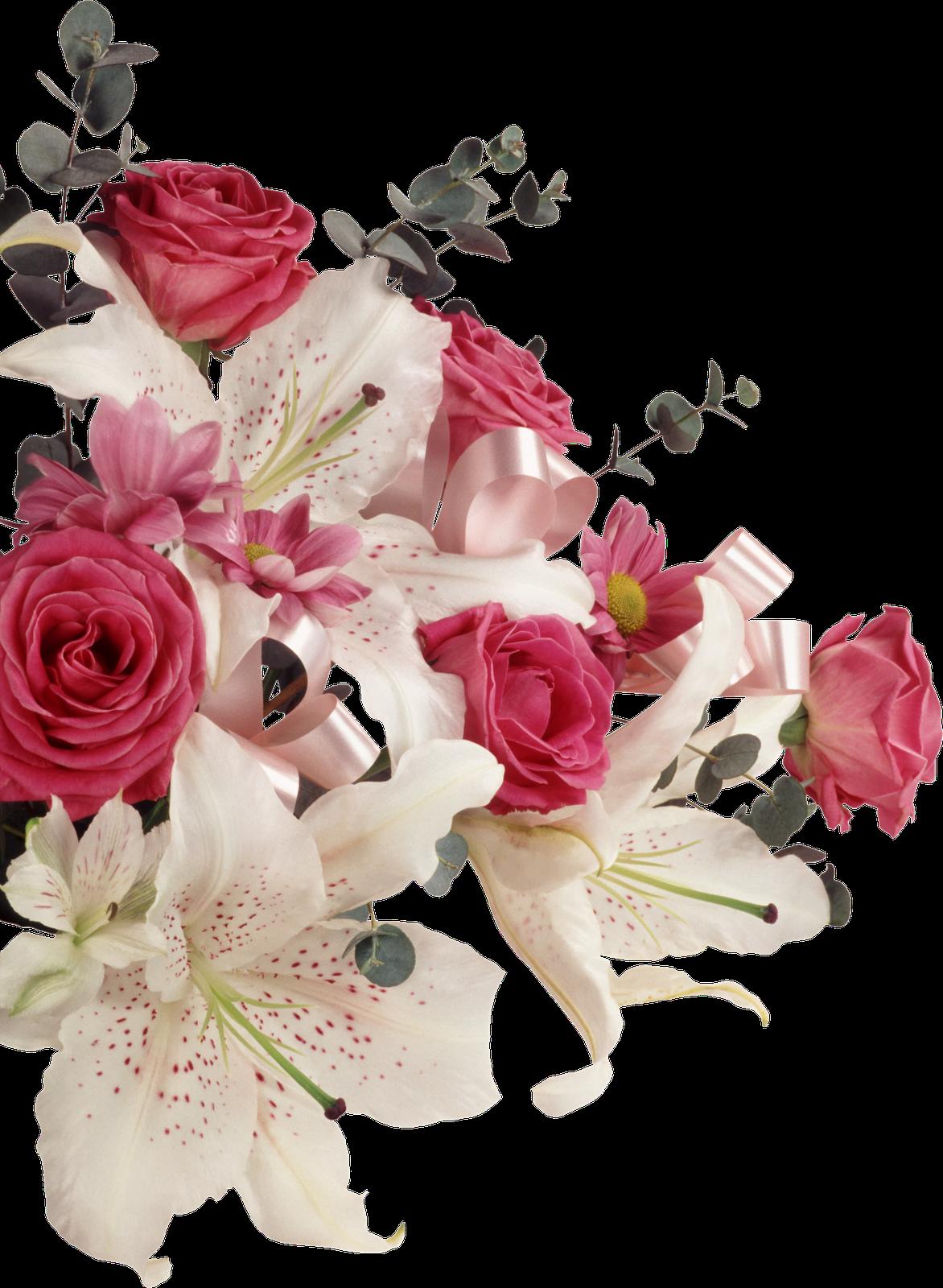 Pin By Elaine Krkl On Flowers Pinterest