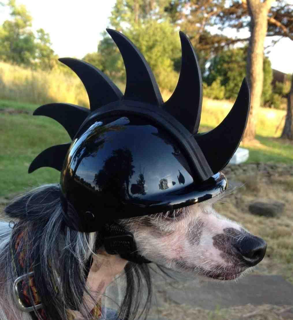 Dog Bike Helmet | bike helmets | Pinterest