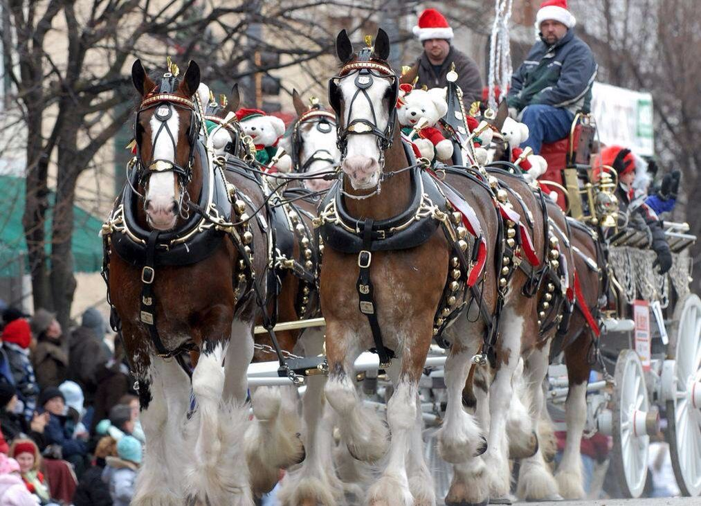 Antique Horse Drawn Carriage Parade in Lebanon, Ohio, U.S.A