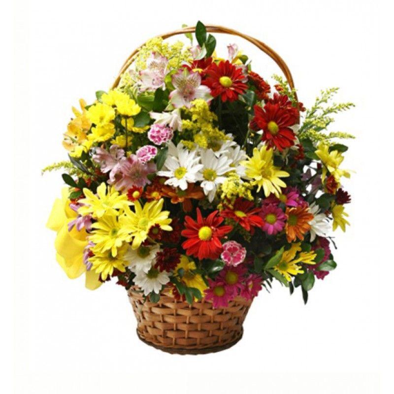 Imagens De Flores Do Campo Pesquisa Google Imagens De Flores