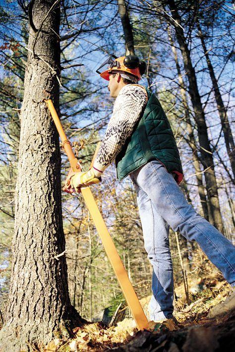 ручная валка леса фото честь руководителя