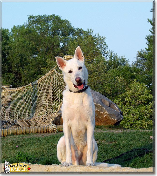 Read Raiden's story the German Shepherd from Iowa and see