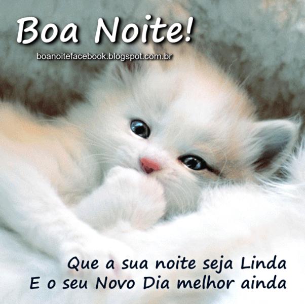 Fabuloso Mensagem de boa Noite para whatsapp com gatinho | mensagem boa  LF94