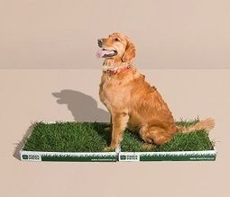 How To Train Your Puppy To Use Pee Pads Dog Stuff Puppy Pads