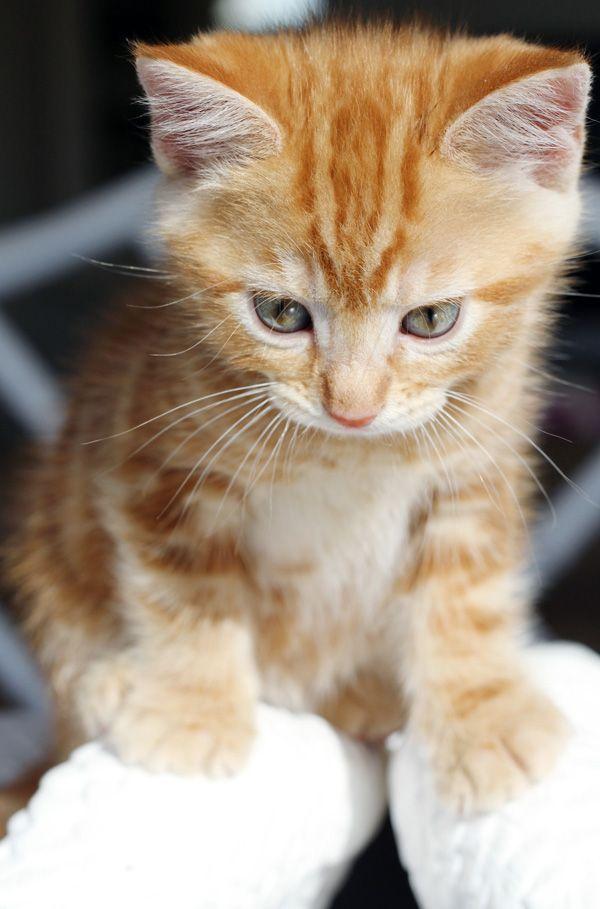 The Bathroom Reno Tabby kitten, Kittens and puppies