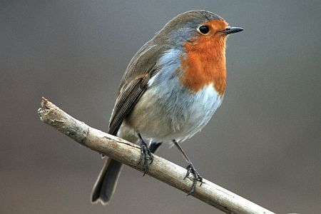 Leer 01 Tiere Des Waldes Vogel Malvorlagen Heimische Vogel