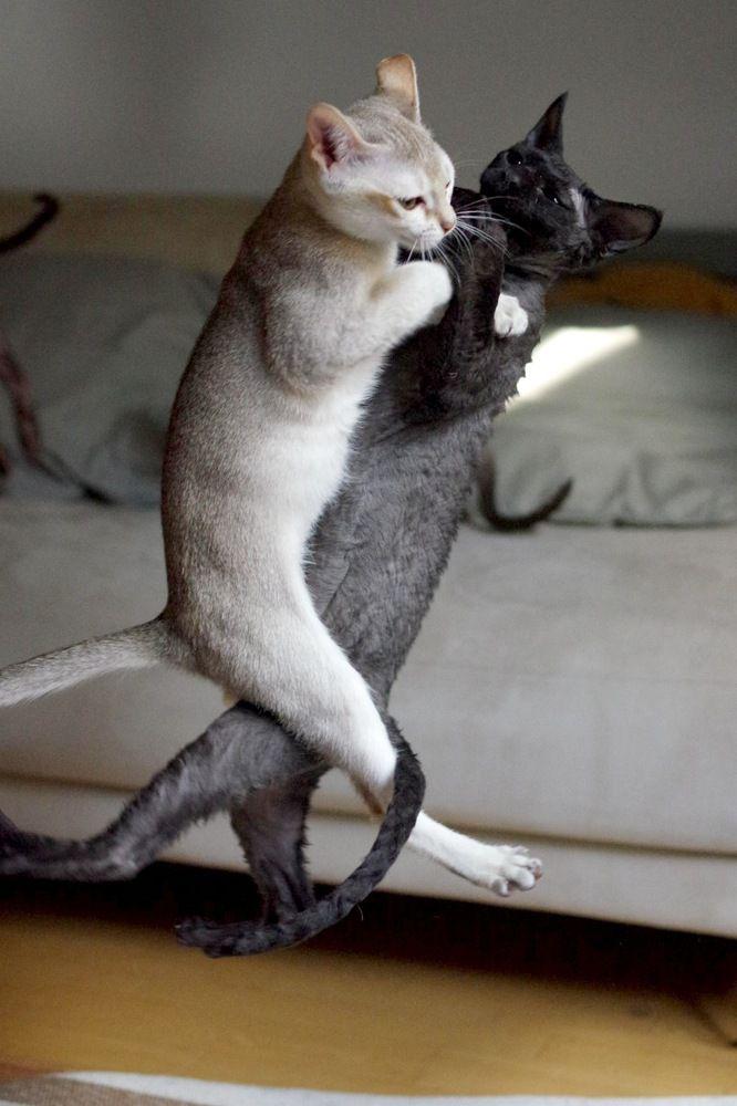 抱き合ってジャンプする猫がいた 日本の「トビネコ」大集合【画像