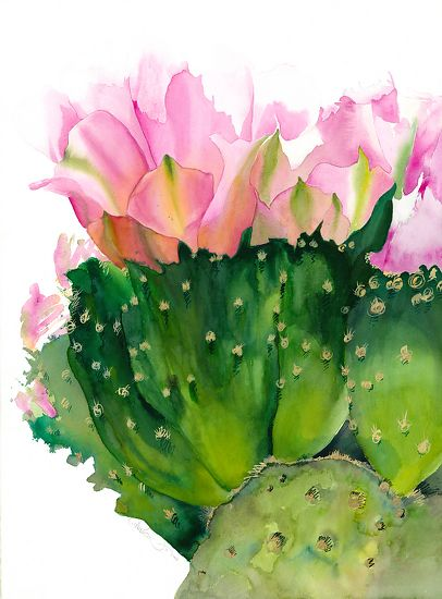 Cactus Flower By Chuck Mcpherson Watercolor 30 X 22 Watercolor