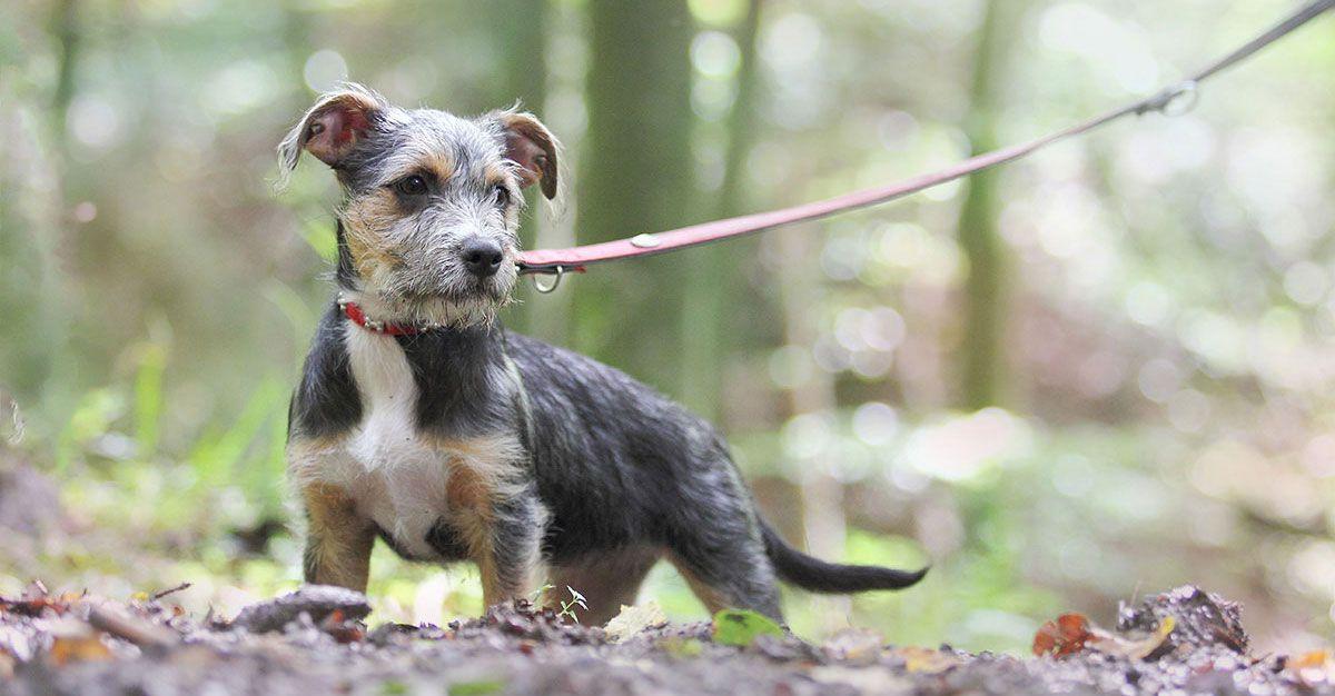 Von Welpen Die Nicht Spazieren Gehen Wollen Mit Bildern Hunde Welpen Spazieren Gehen