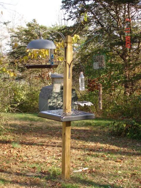 Squirrel Baffle Doubles As A Feeding Platform Great Idea Homemade Bird Feeders Squirrel Proof Bird Feeders Squirrel Baffle