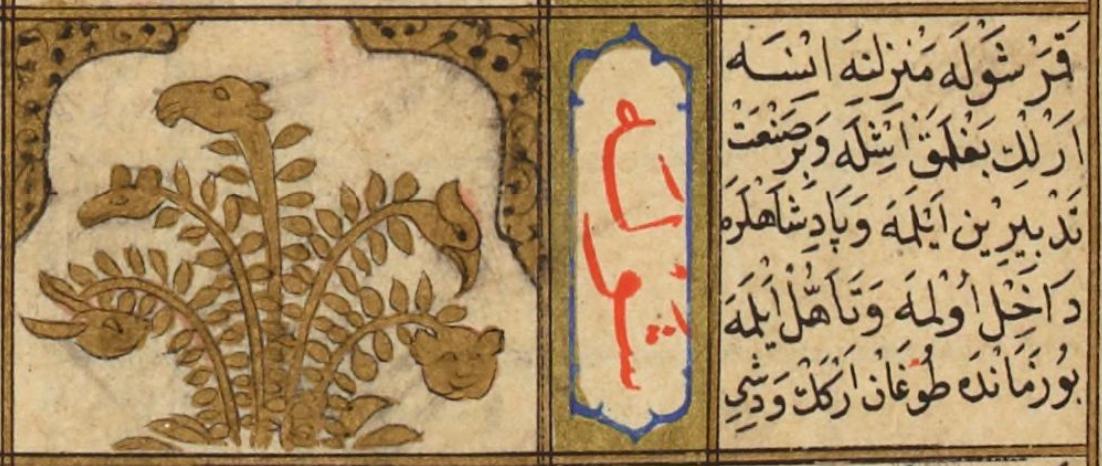 "Shawla (the Sting of Scorpio): a leafy gold bush that flowers into small animal heads. From مطالع السعادة و ينابع السيادة ""Metaliʿü'l-saadet ve yenabiʿü-l-siyadet Seyyid"" (The Sunrise lucky stars and sovereignty Sources) by Mohammed ibn Emir Hasan el-Suʿudî - Istanbul (Turkey) in 1582. Paper, 183 f., 31 × 20.5 cm. Followed closely from the Kitab al-bulhan. http://www.moleiro.com/en/miscellanea/the-book-of-felicity/miniatura/791"