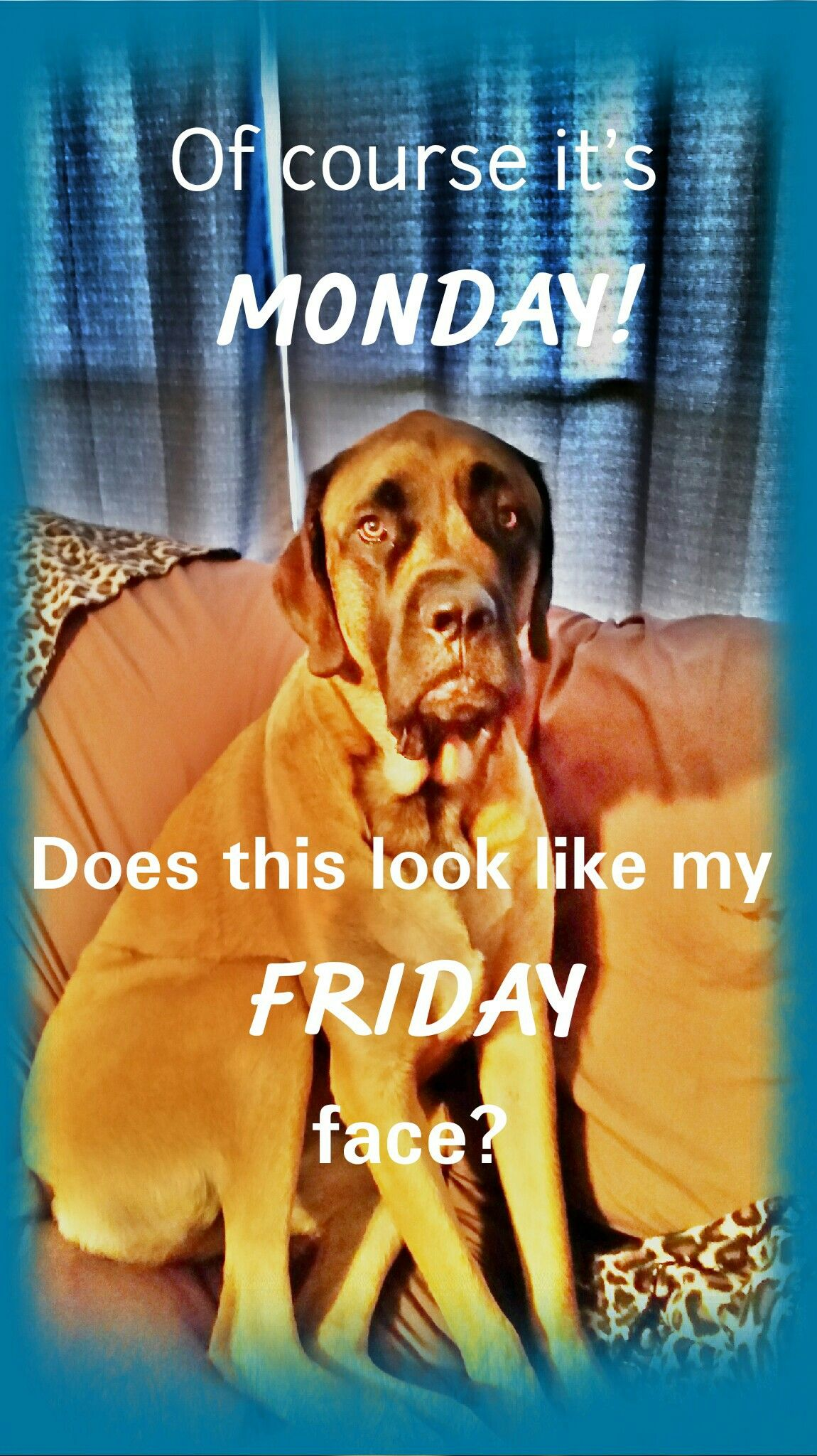 Of course it's Monday! Does this look like my Friday face