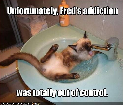 Google Image Result for http://4.bp.blogspot.com/-4vVj_qvEVmQ/T3rH3ciOQcI/AAAAAAAABeg/5T4ucs6jt_g/s1600/funny-pictures-your-cat-is-addicted-to-water.jpg