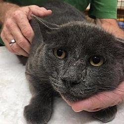 petcard Pets, Animals, Cats