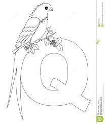 Quetzal Coloring Page Google Search Dibujos Alfabeto Abecedario