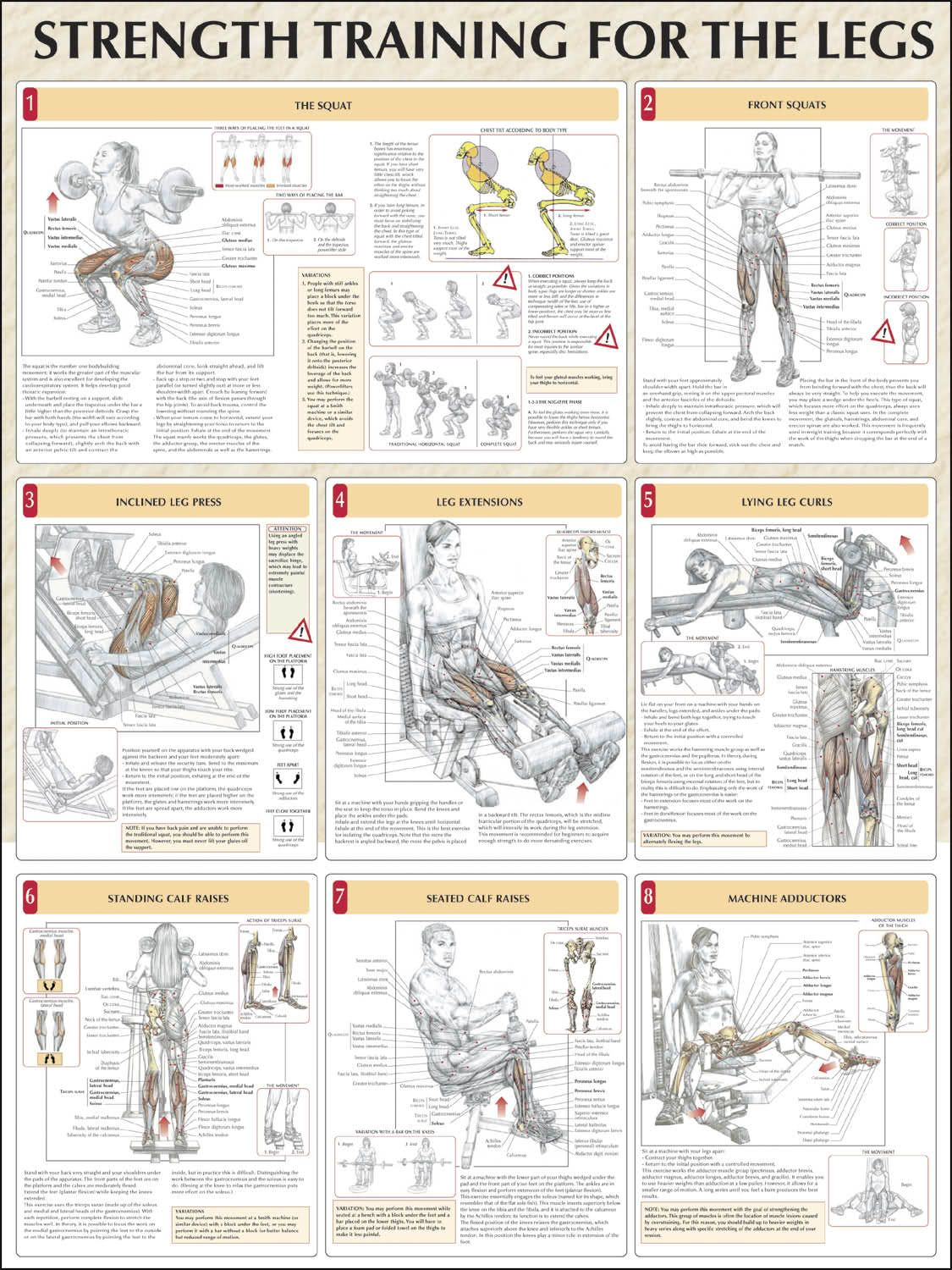 Strength training for the abdomen chart fitness health strength training for the abdomen chart fitness health pinterest strength chart and strength workout nvjuhfo Choice Image