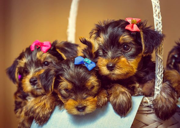Trendy Dog Names Shih Tzu Puppies