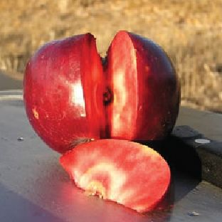 red flesh apple tree— sweet-tart