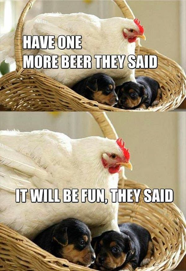 #chiken #dogs #puppies