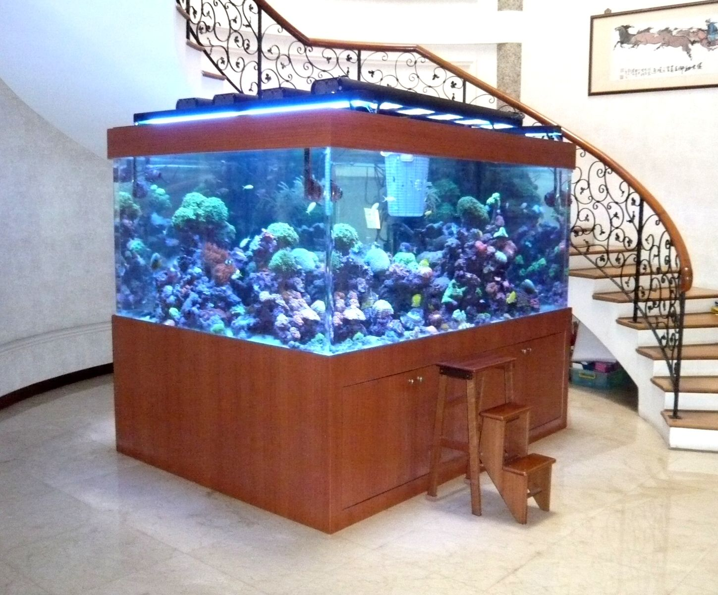 Acrylic marine reef tank the best collection of home for How to build an acrylic fish tank