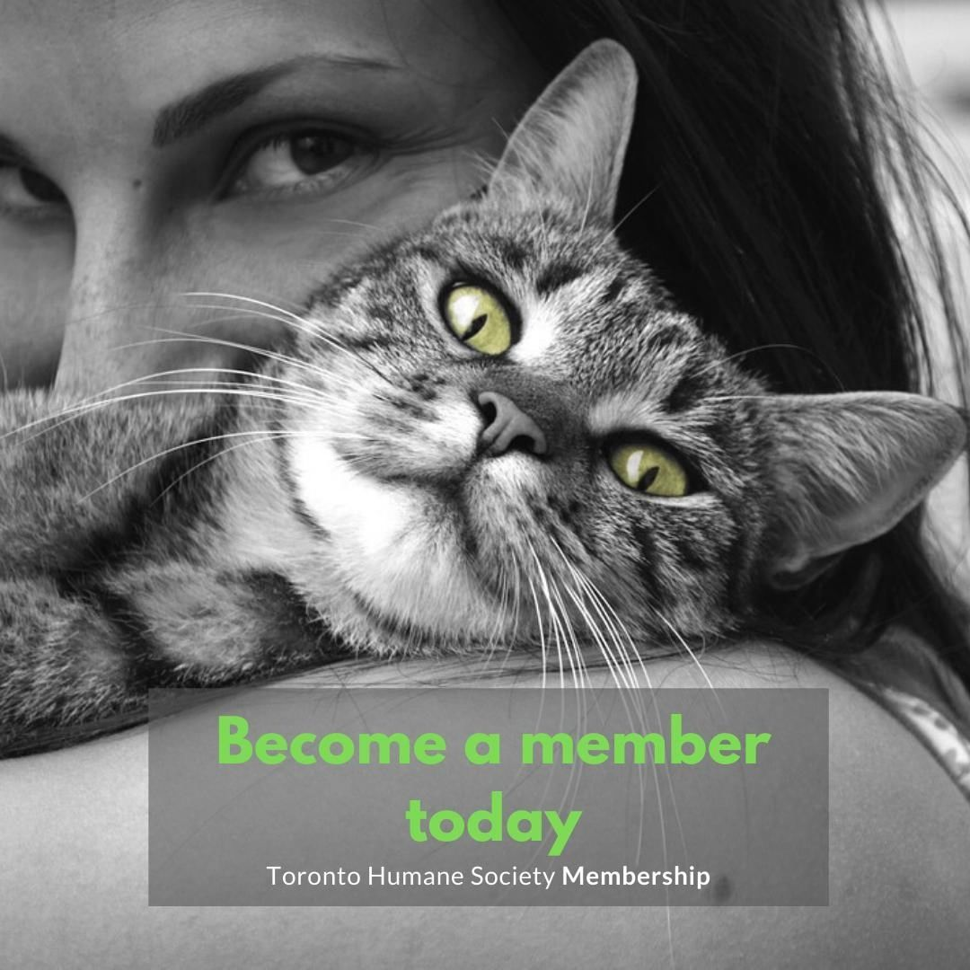 As A Thank You For Becoming A Toronto Humane Society Member You