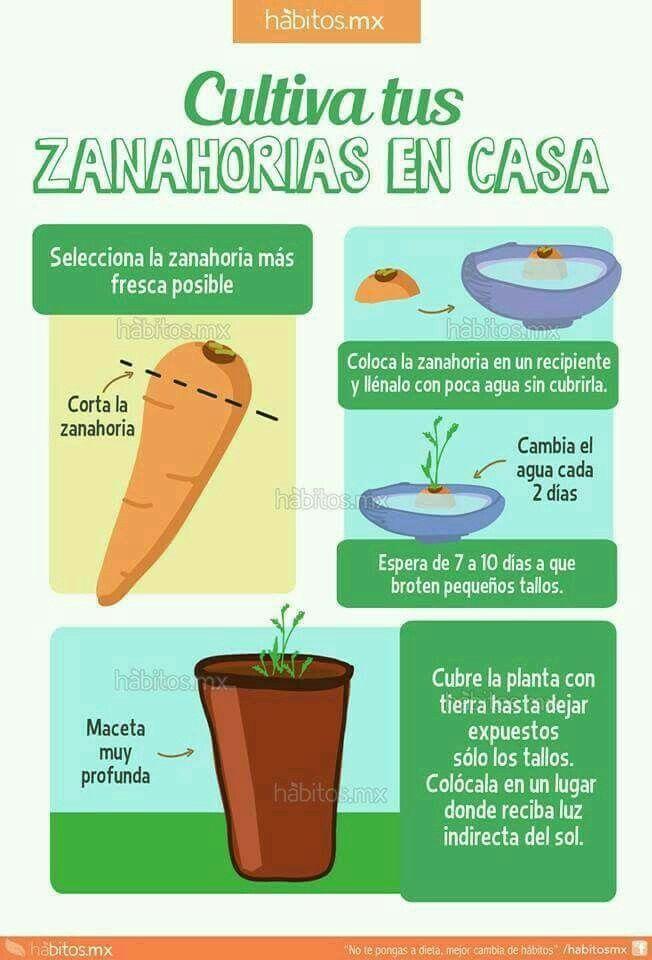 Huerto en casa cultivo de zanahorias siembra for Asociacion cultivos huerto urbano
