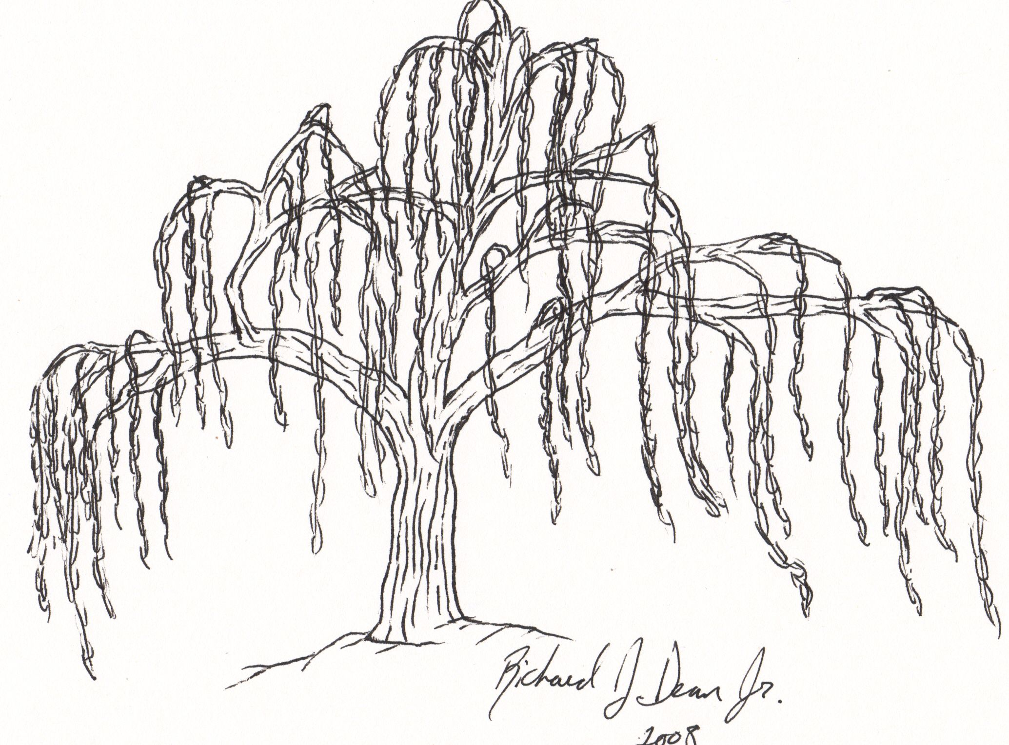 Drawings Of Willow Trees