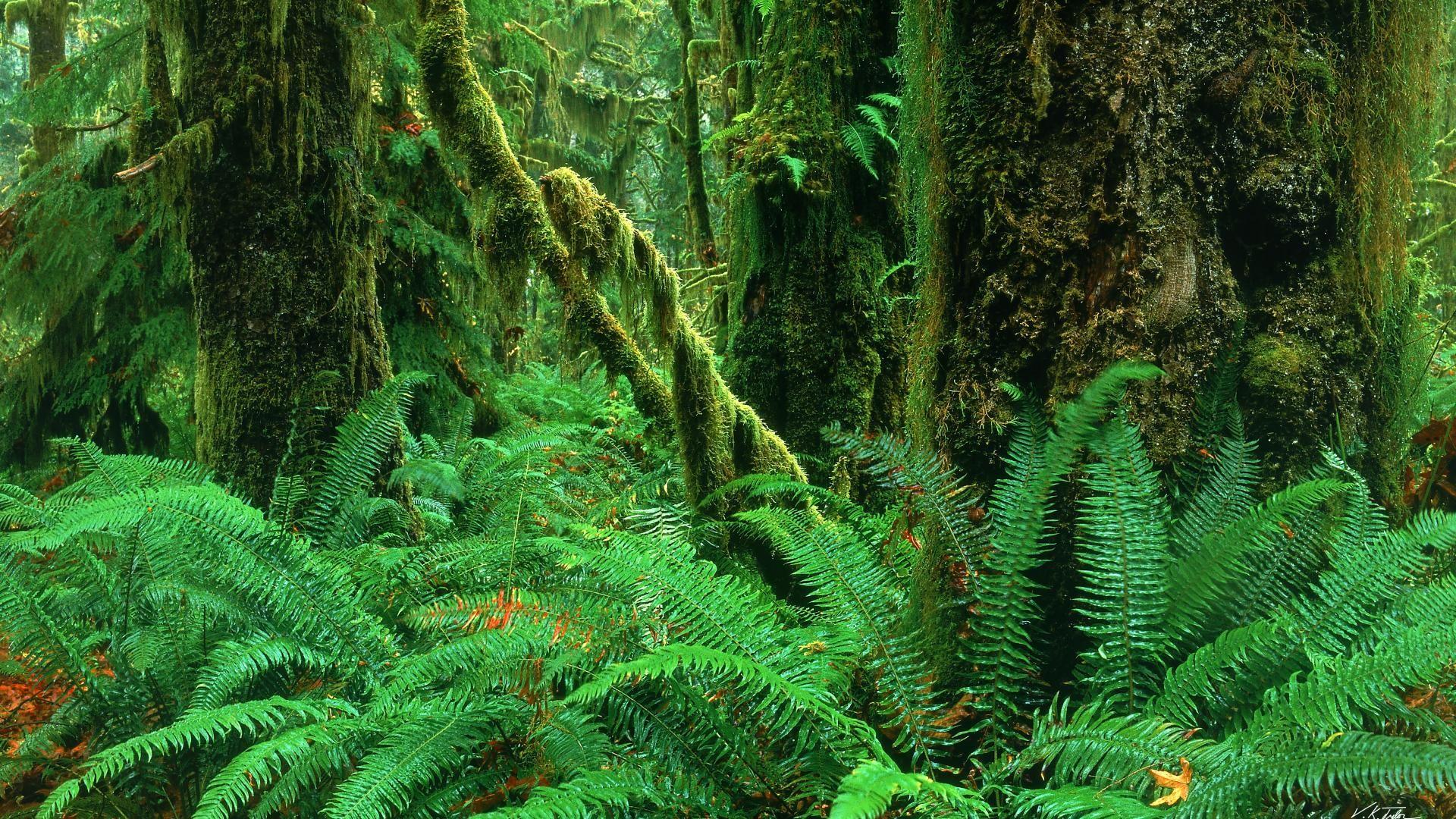 rainy forest background
