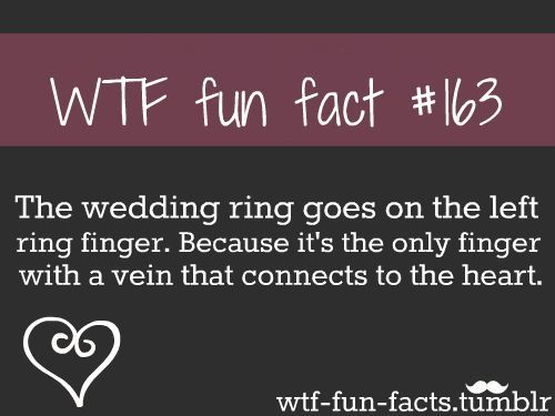 Fun Facts Google Search Fun Facts Lol Pinterest Lustig