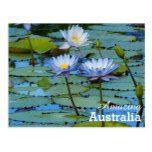 Amazing Australia postcard  Amazing Australia postcard  $1.10  by Australian_Dream   More Designs http://bit.ly/2g4mwV2 #zazzle
