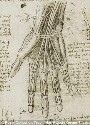 Scans that prove Leonardo da Vinci was right all along: New show ...