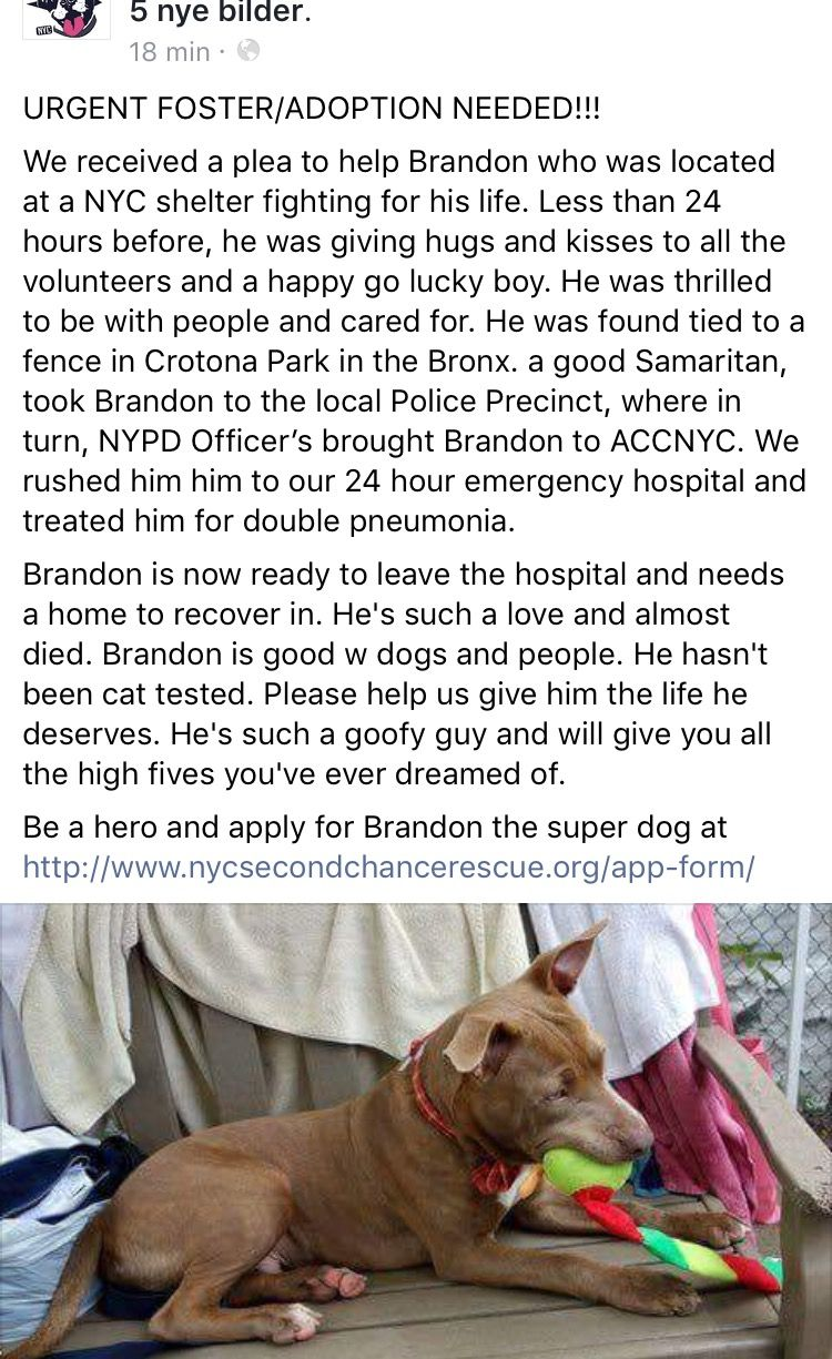 11 7 16 Brandon Survived Nycacc And Pneumonia