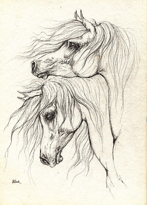 Two Arabian Horses Drawing Other Peoples Art Horse