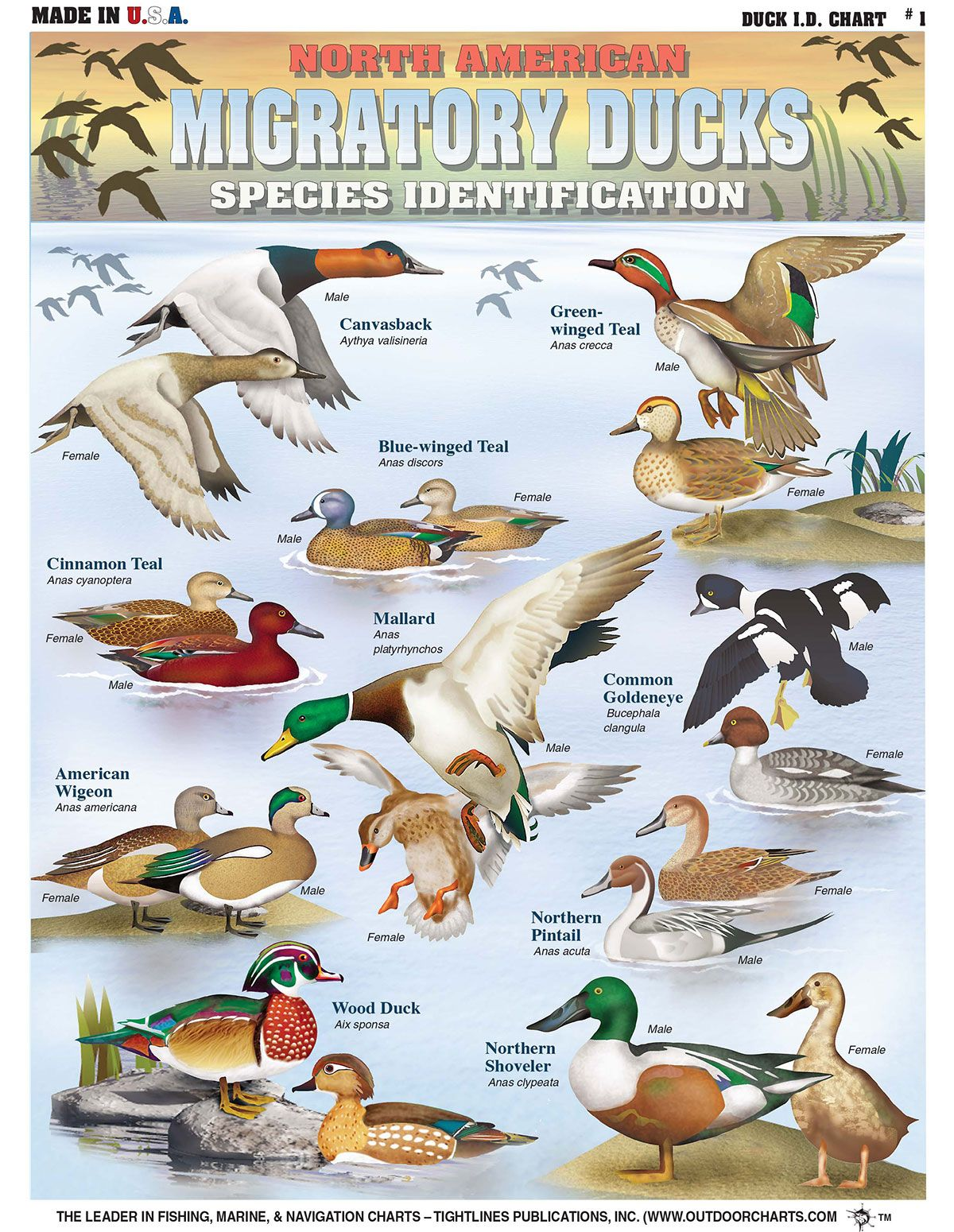Pin On Duck Hunting Manual Guide