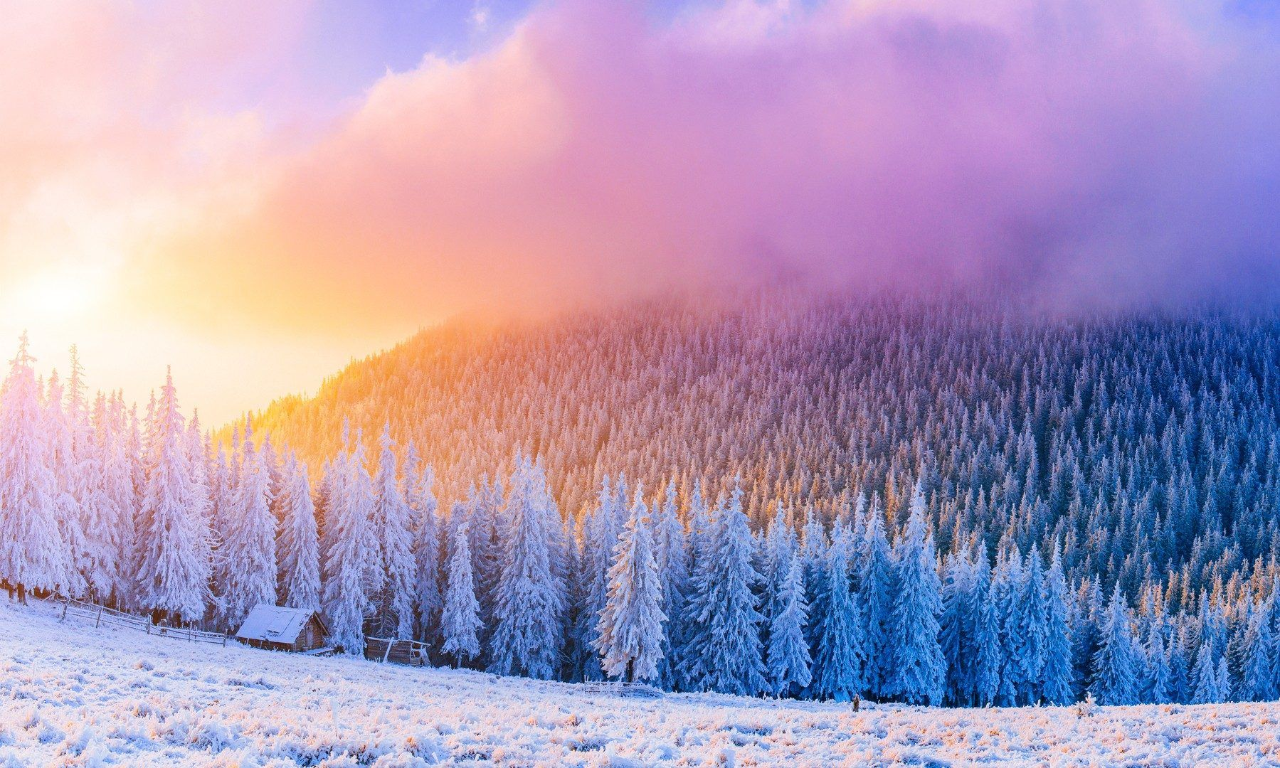 Winter Frost Windy Snow Trees Sunrice Clouds Pine Forest