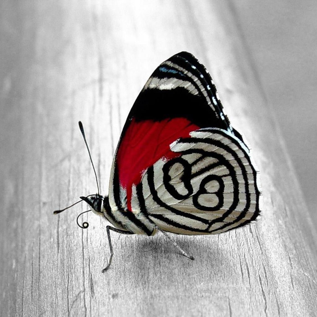 Cool butterfly would be sweet as a tattoo
