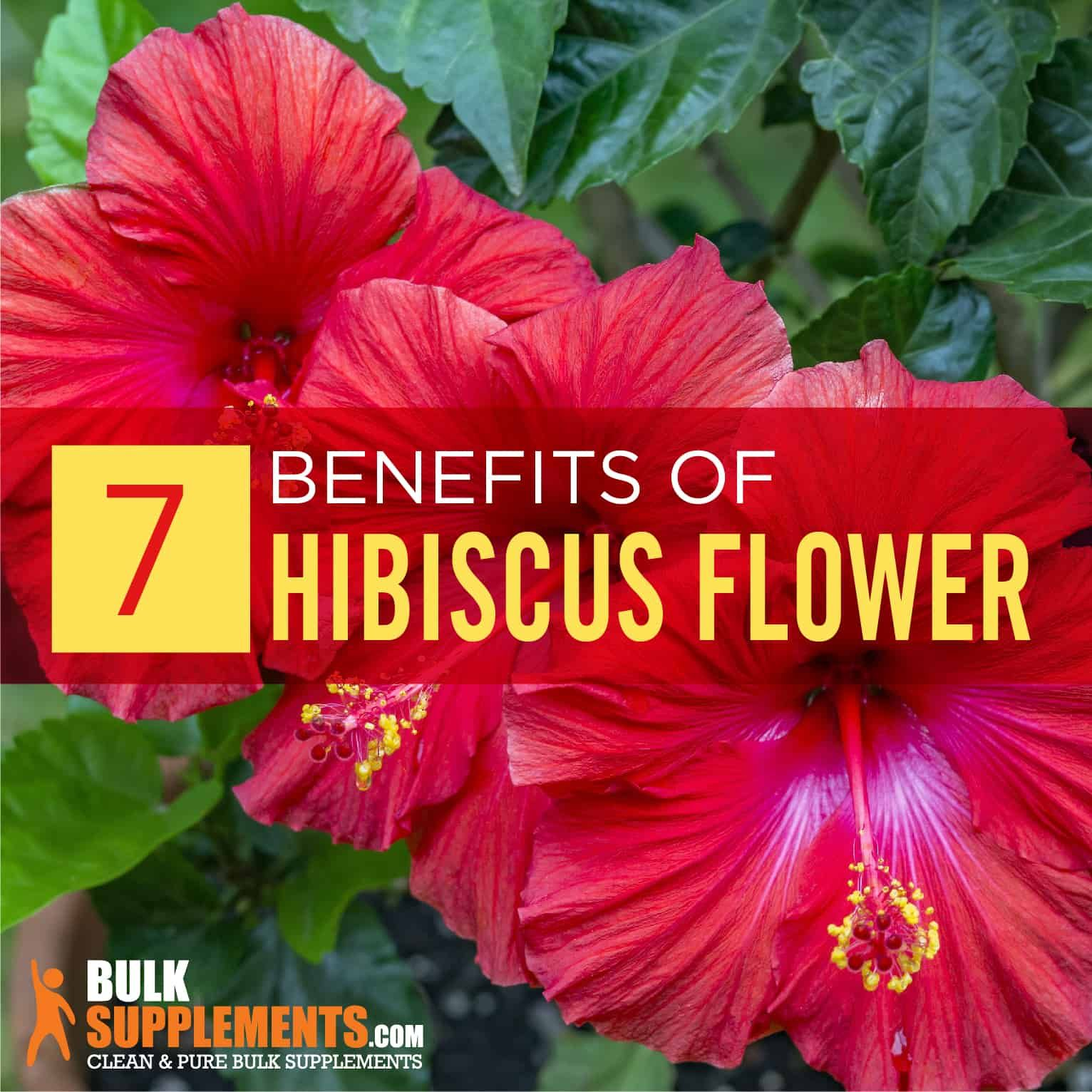 Hibiscus Flower Benefits Side Effects Dosage Bulksupplements Com In 2020 Hibiscus Flowers Reduce Cholesterol Hibiscus