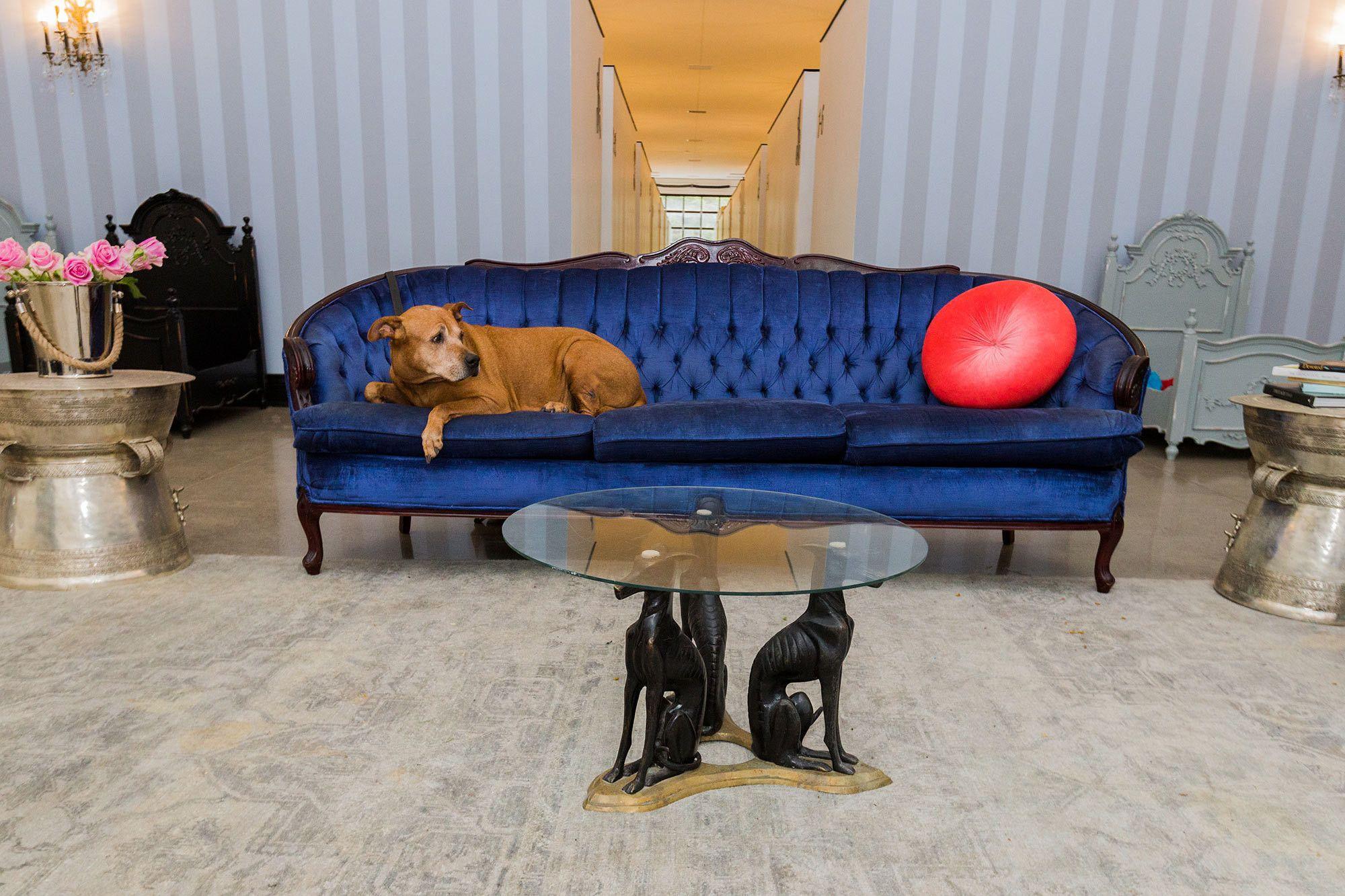 Adopt Kelly On Petfinder Dog Adoption Pet Adoption Shiba Inu