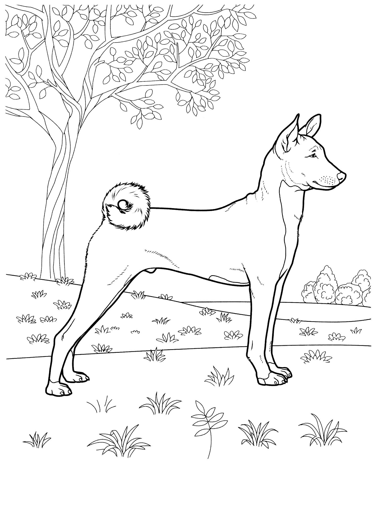 Dog Coloring Pages 34 Teenagers Coloring Pages