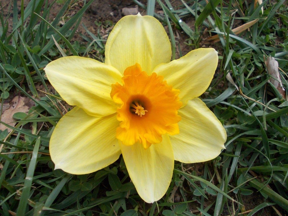 La Nature Plante Fleur Petale Printemps Macro Botanique Jaune Jardin