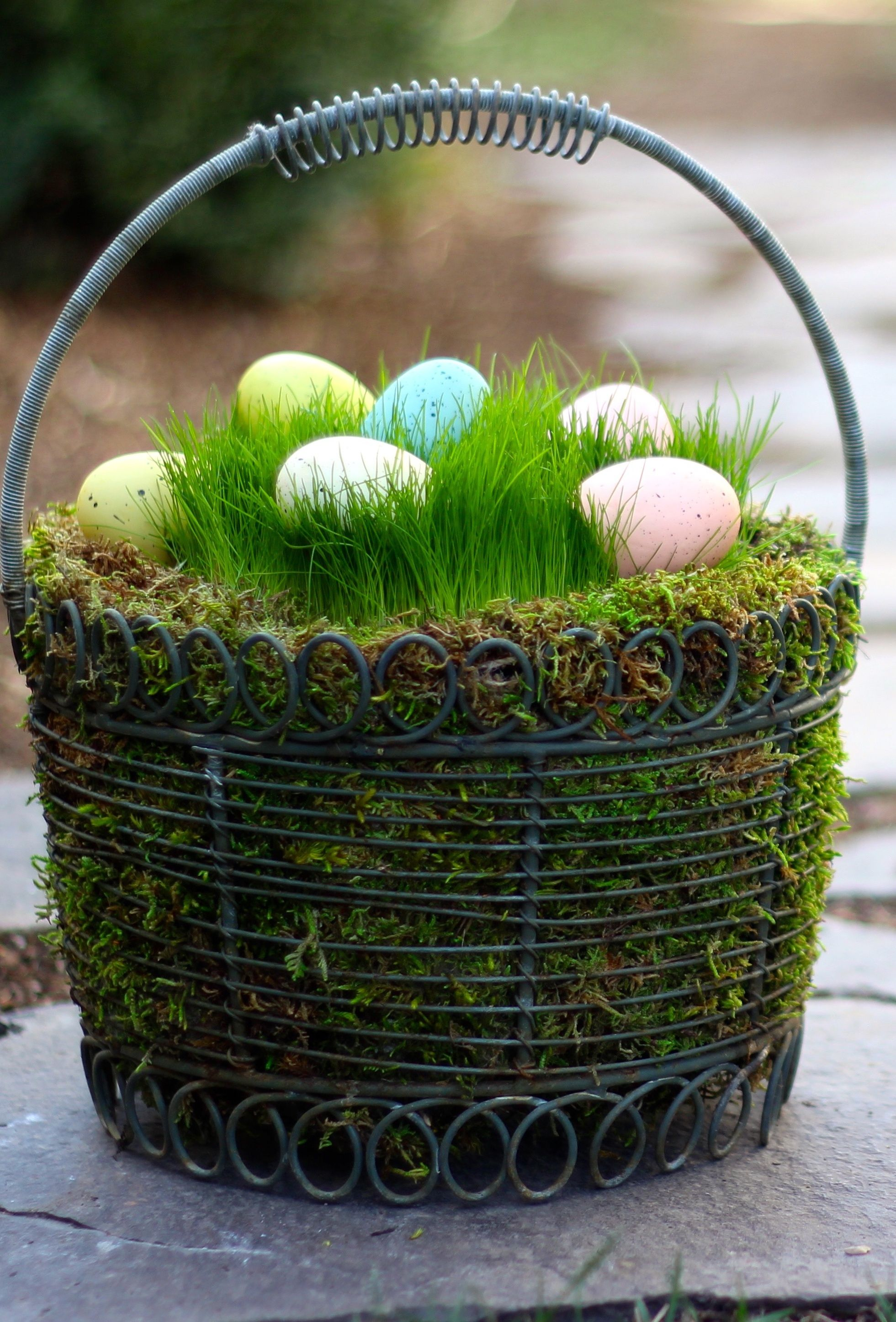 How simple and clever grow your own easter grass this year no an easter basket with real grass wonderful way to showcase dyed eggs candy or other spring decor negle Images