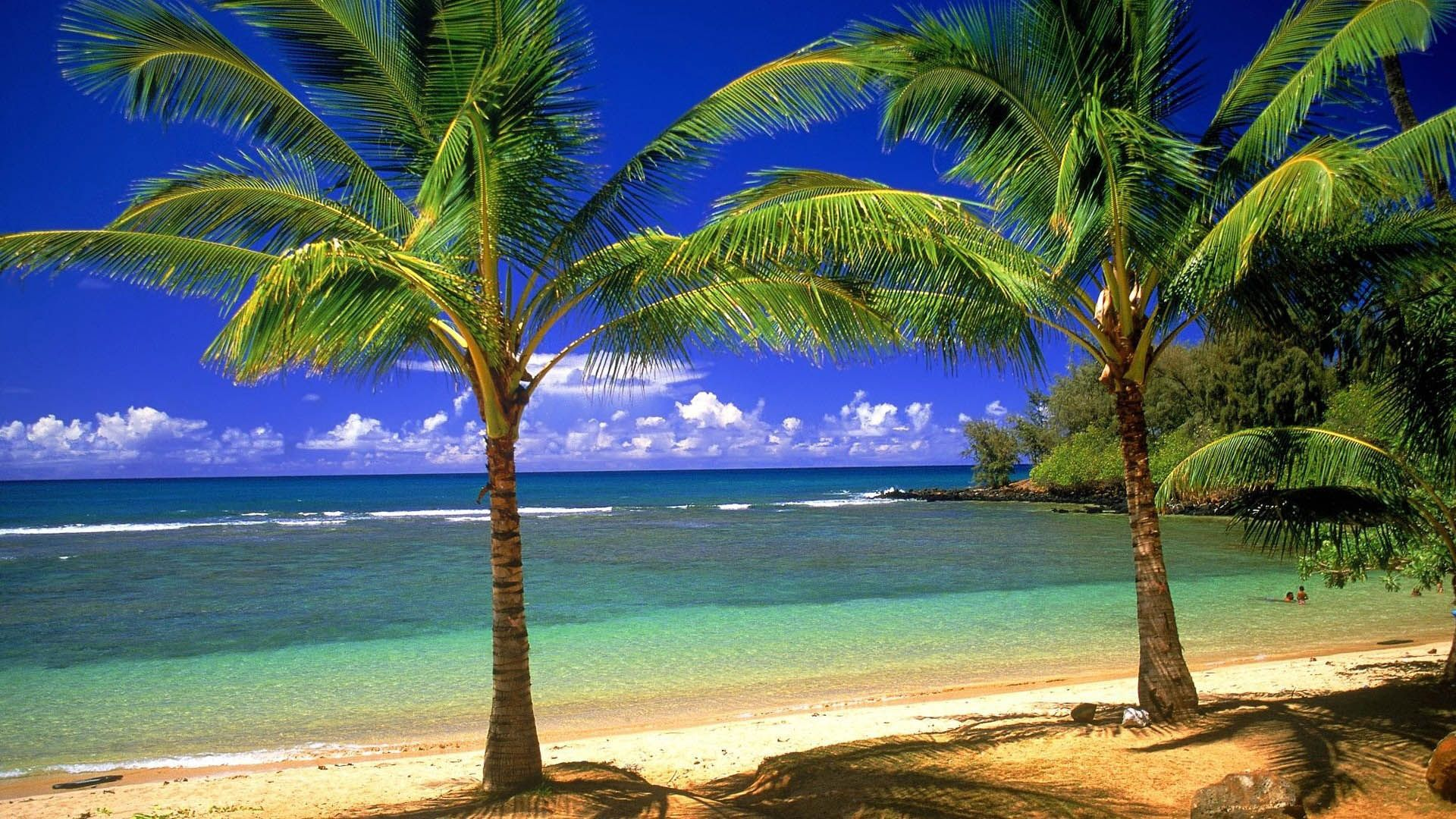 Palm Tree Types And 16 Photos | Palm tree types and Travel pics