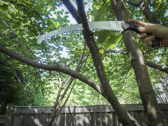 #Silky #Sugoi 360 #Pruning #Saw Review