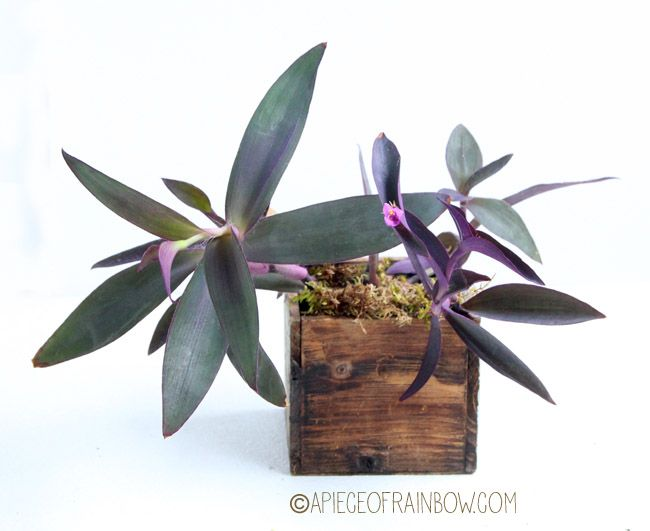 12 easy indoor plants for beauty clean air - Flowering House Plants Purple