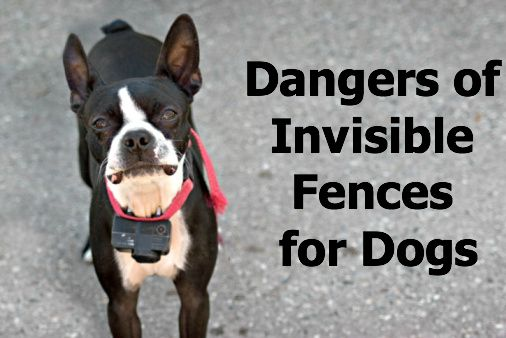 Dangers Of Invisible Fences For Dogs My Care2 Blogs