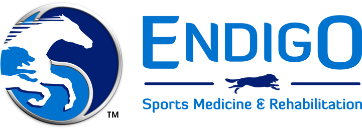 Endigo Sports Medicine And Rehabilitation Acupuncture Chiropratic Laser Therapy Herbals Holistic Logo 2 Tammy Sports Medicine Rehabilitation Veterinary Clinic