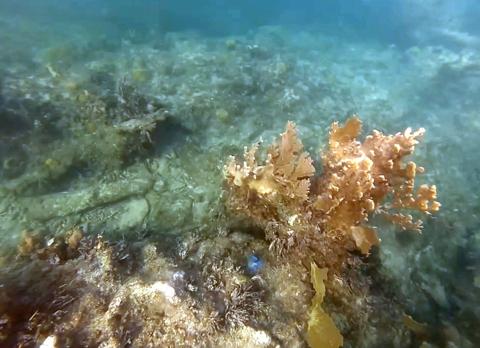 ..Caicos Island Reef