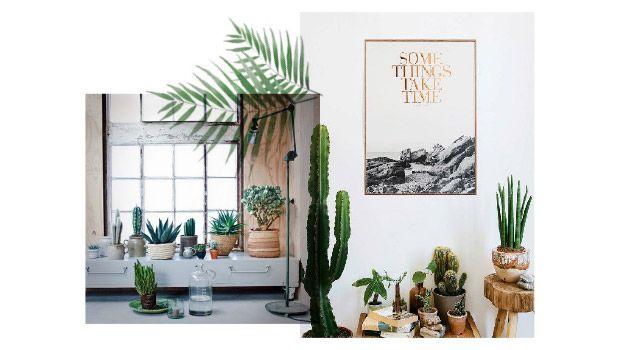 grote cactus in huis - Google zoeken